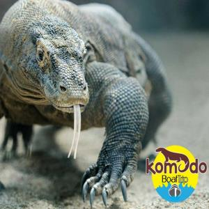 Komodo Boat Trip, Komodo Tour and Travel