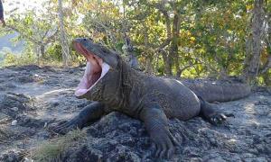 Pilih Durasi Tour Yang Anda Butuhkan Di Komodo Boat Trip